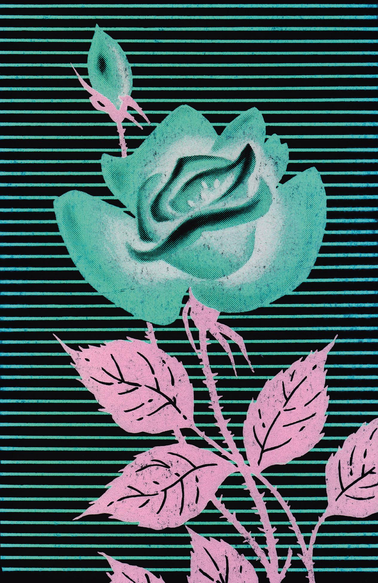 Quasi Rose