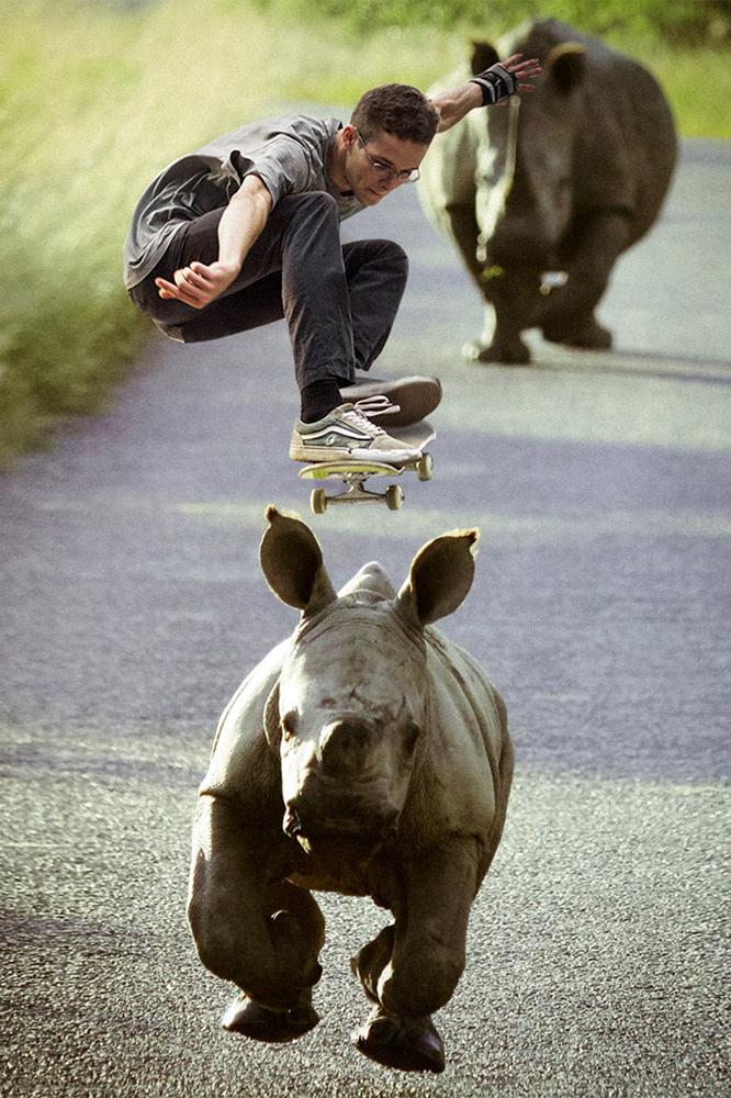 rhino-crop