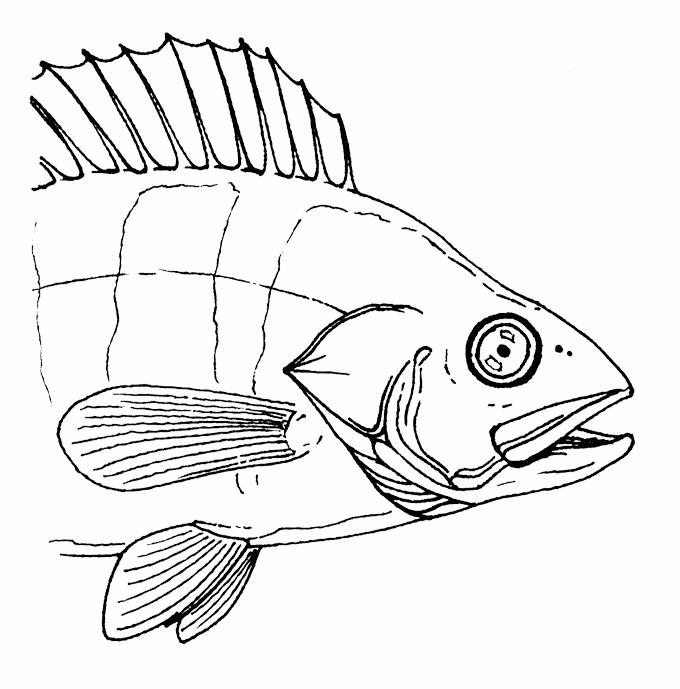 Fisheye_Web